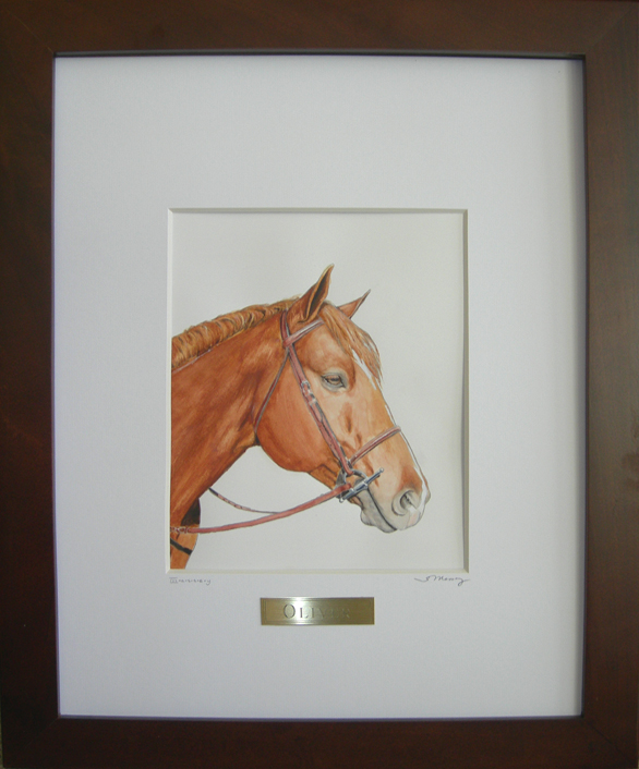 Finished Portrait of Oliver - Quarter Horse